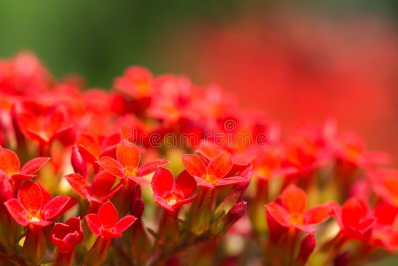 Download Красный цветок стоковое фото. изображение насчитывающей green - 37925446