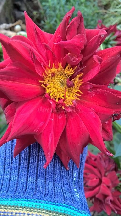 Красный цветок стоковое изображение