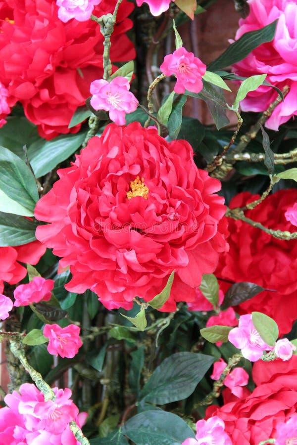 Красный цветок стоковые фотографии rf