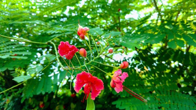 Красный цветок grwen в всходе парка стоковое фото rf
