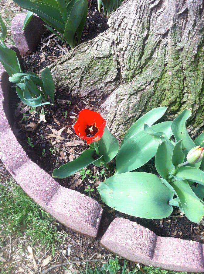 Красный цветочный сад - дерево стоковые фотографии rf