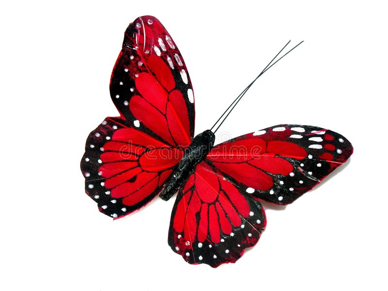красный цвет бабочки стоковые фото
