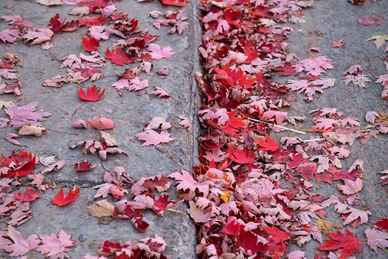 Красный цвет выходит на осень на тротуаре/мостоваой стоковое фото rf