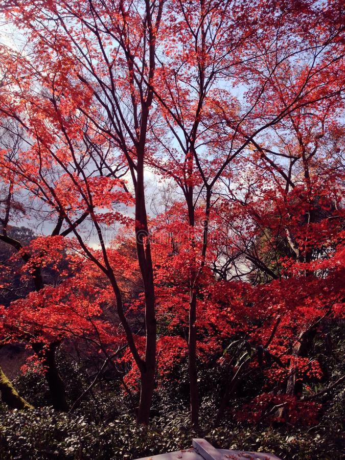 Красный цвет выходит обои стоковые фото