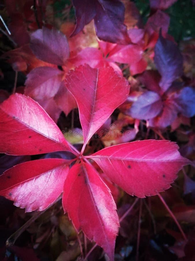 красный цвет в октябре стоковое изображение