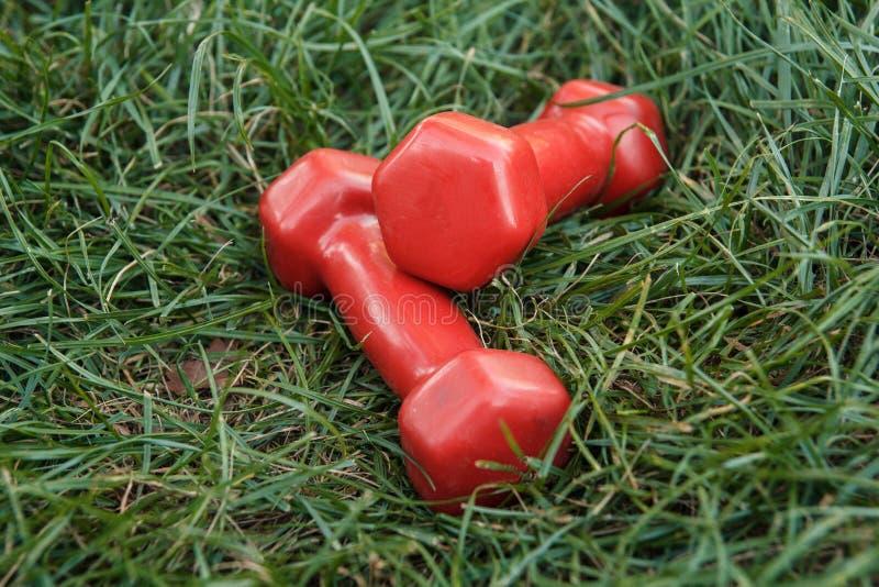красный цвет гантели стоковые фото