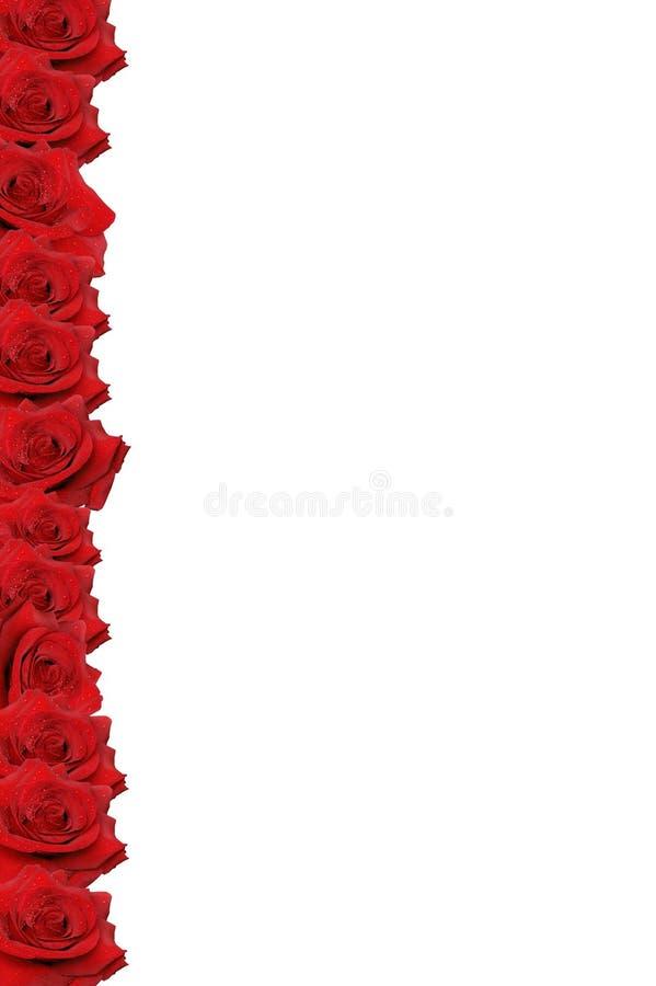 красный цвет граници поднял стоковое изображение