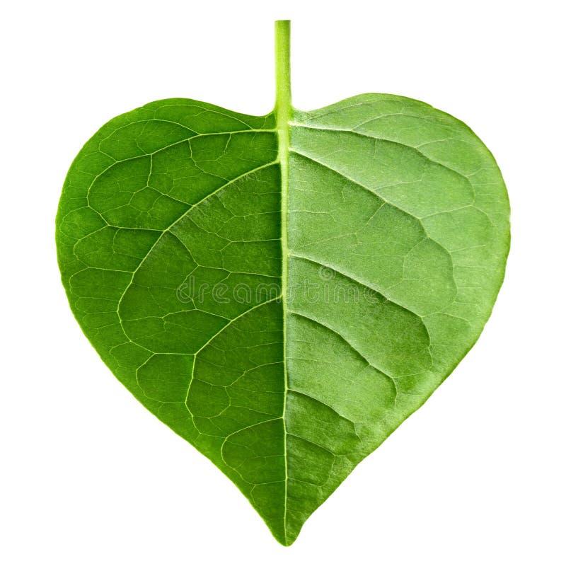красный цвет листва изолированный сердцем стоковая фотография rf