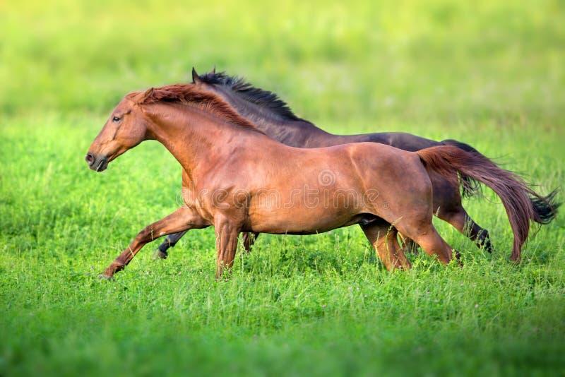 Красный цвет и бег лошади залива свободный стоковые изображения rf