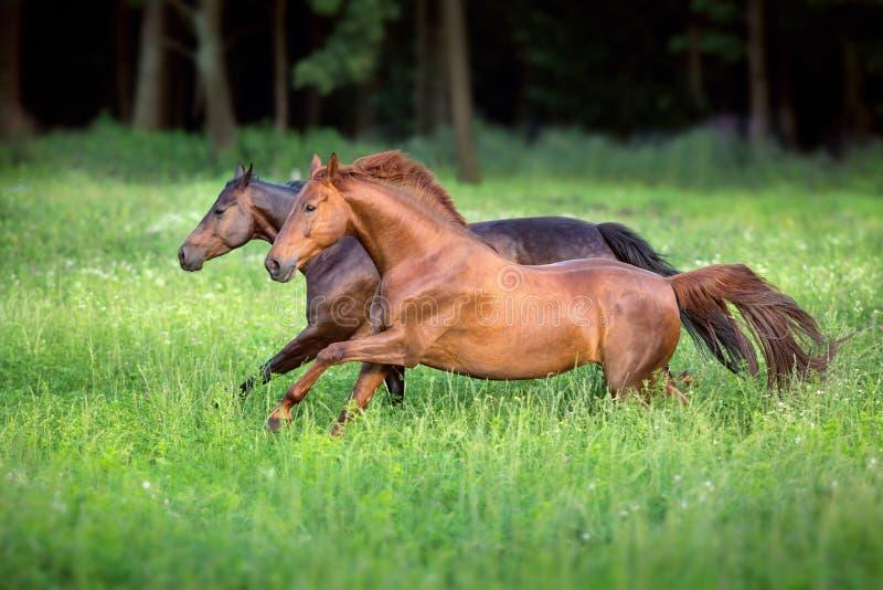 Красный цвет и бег лошади залива свободный стоковое изображение