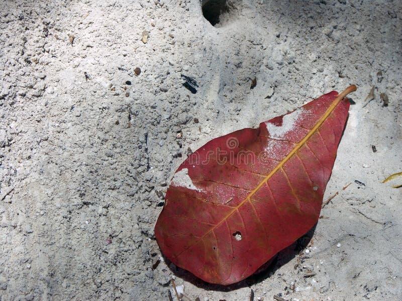 красный цвет листьев стоковые изображения rf