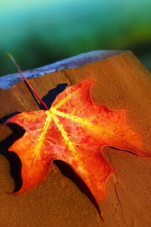красный цвет листьев