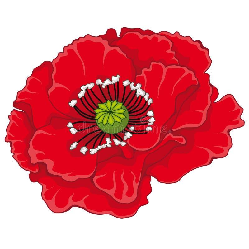 красный цвет мака цветений шток померанца иллюстрации предпосылки яркий бесплатная иллюстрация