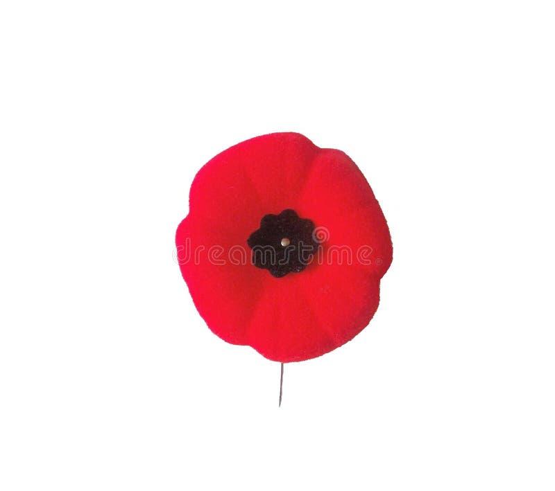 красный цвет мака цветения стоковое фото