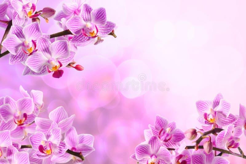 красный цвет орхидеи стоковое фото