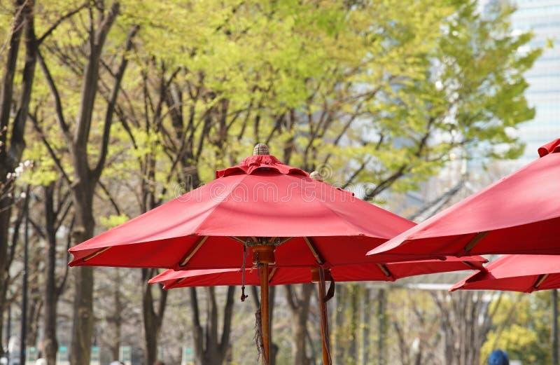 красный цвет парасоля стоковые фотографии rf