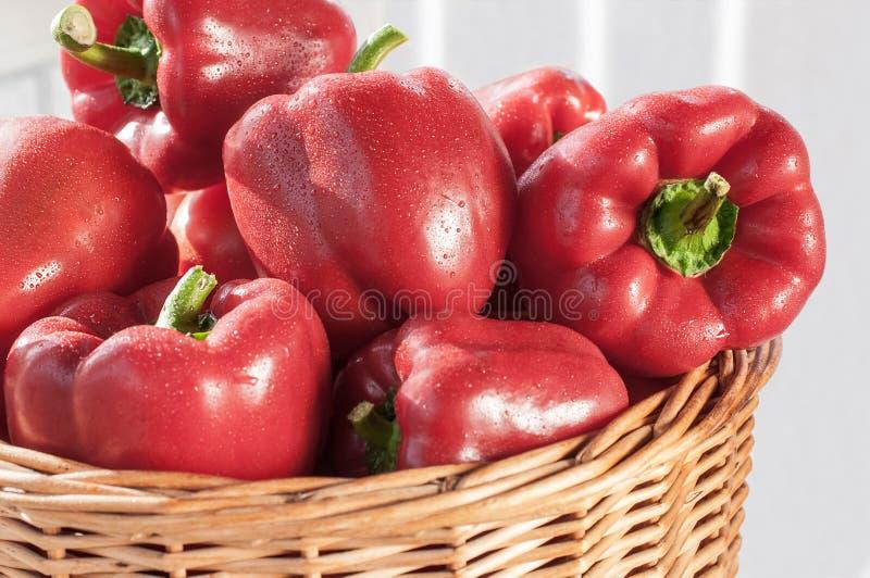 красный цвет перца колокола свежий стоковая фотография