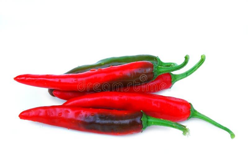 красный цвет перца стоковая фотография