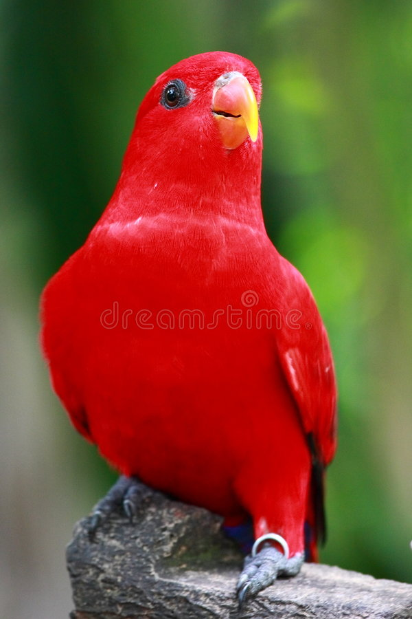 красный цвет попыгая стоковая фотография