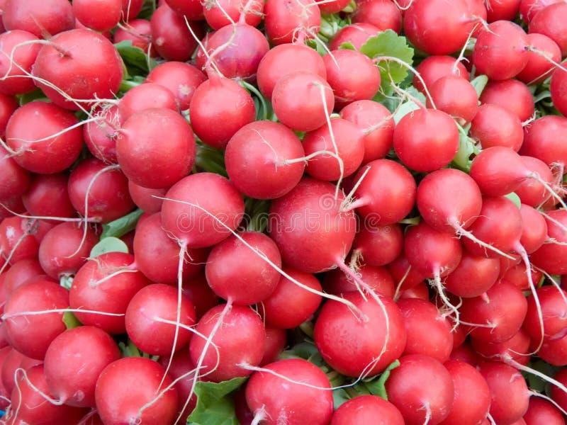 красный цвет редиски стоковое изображение