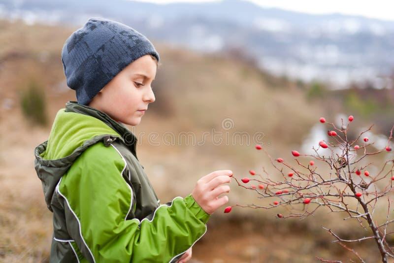 красный цвет рудоразборки ребенка ягод стоковая фотография