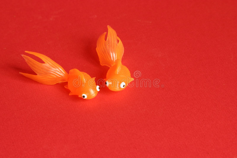красный цвет рыб стоковые фотографии rf