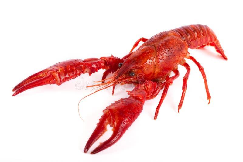 красный цвет рыб craw стоковое фото rf