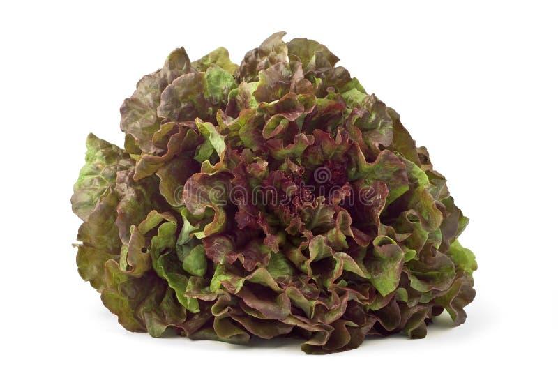 красный цвет салата листьев стоковое изображение