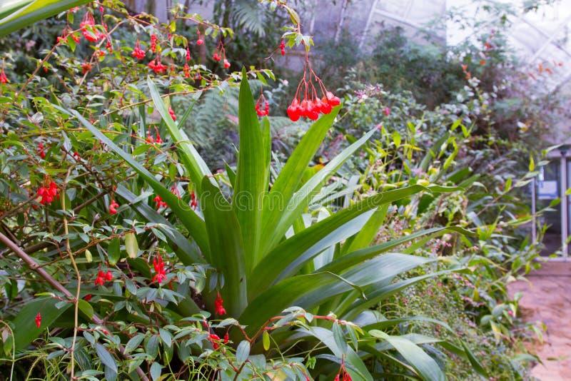 красный цвет сада цветков стоковые фото