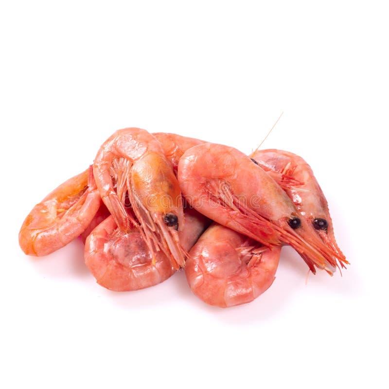 Красный цвет сварил креветку или креветку изолированные на белой предпосылке стоковая фотография