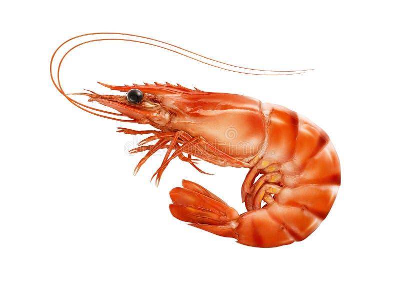 Красный цвет сварил креветку креветки или тигра изолированную на белой предпосылке стоковые изображения