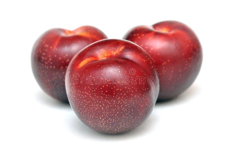 красный цвет сливы плодоовощ стоковое изображение