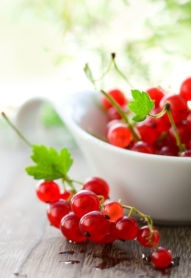 красный цвет смородины стоковые фото