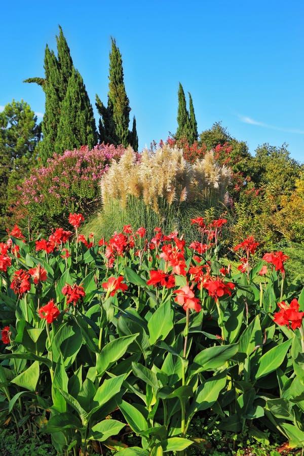 Красный цвет цветет и декоративные тростники стоковые фото