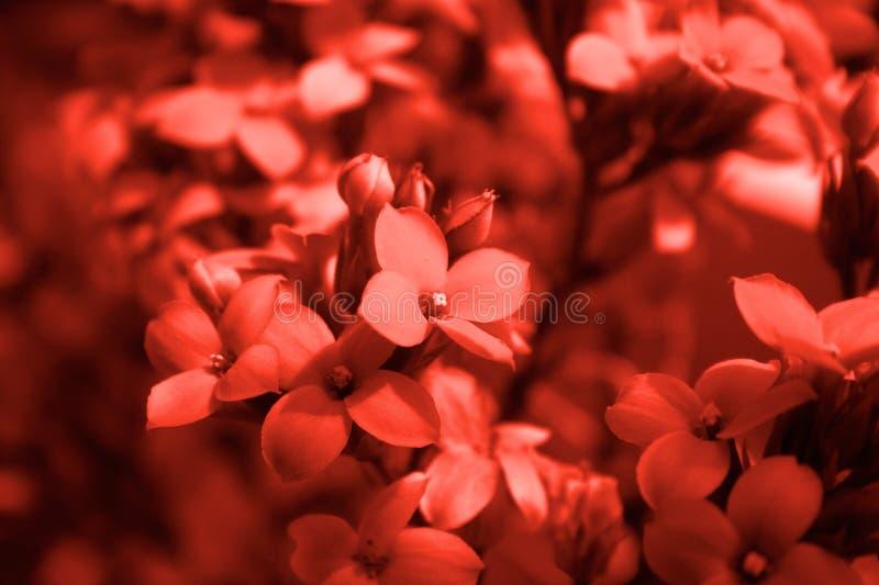 красный цвет цветка детали Стоковые Изображения