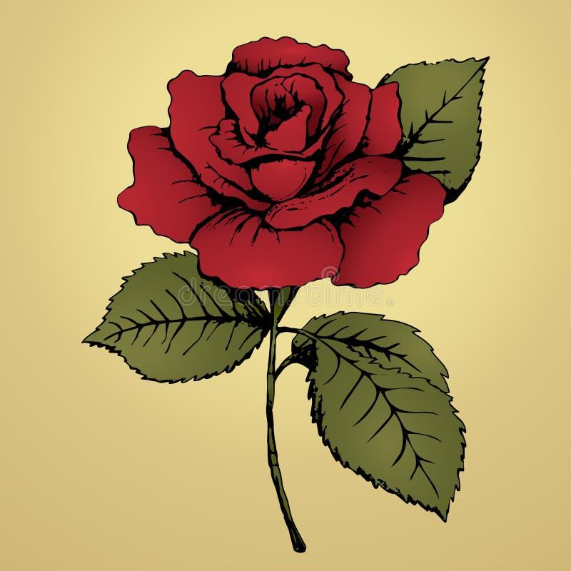 красный цвет цветка поднял чертеж вручает ее нижнее белье утра вверх по теплым детенышам женщины Отпочковывайтесь, красные лепест иллюстрация штока