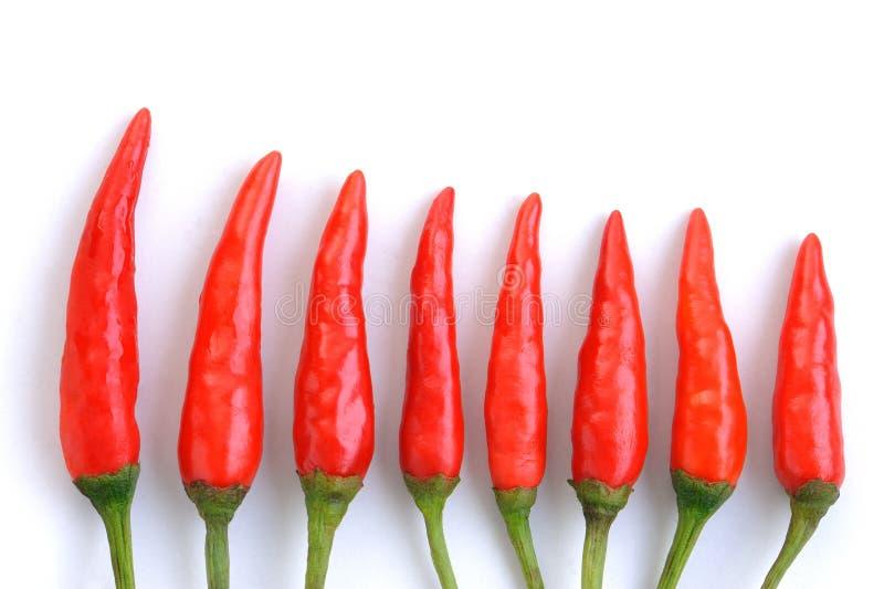 красный цвет chili стоковая фотография rf