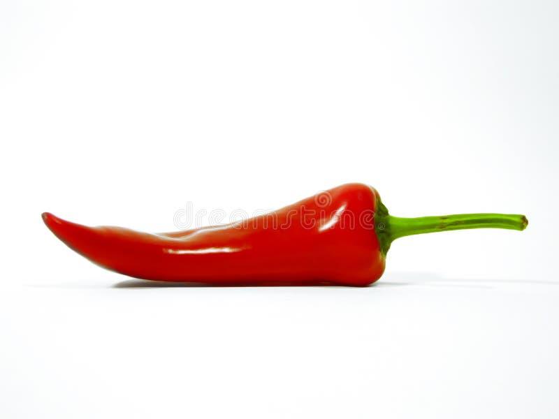 красный цвет chili стоковое фото rf