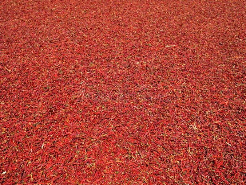красный цвет chili стоковое изображение rf