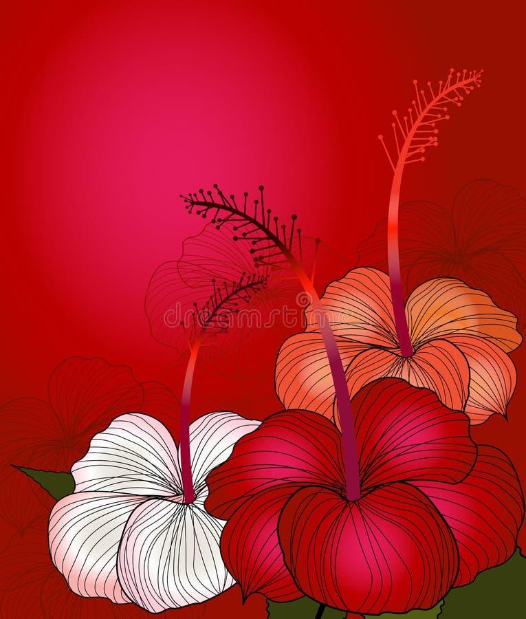 красный цвет hibiscus иллюстрация вектора