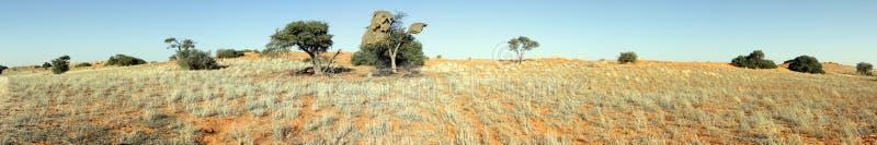 красный цвет kgalagadi дюны стоковые фотографии rf