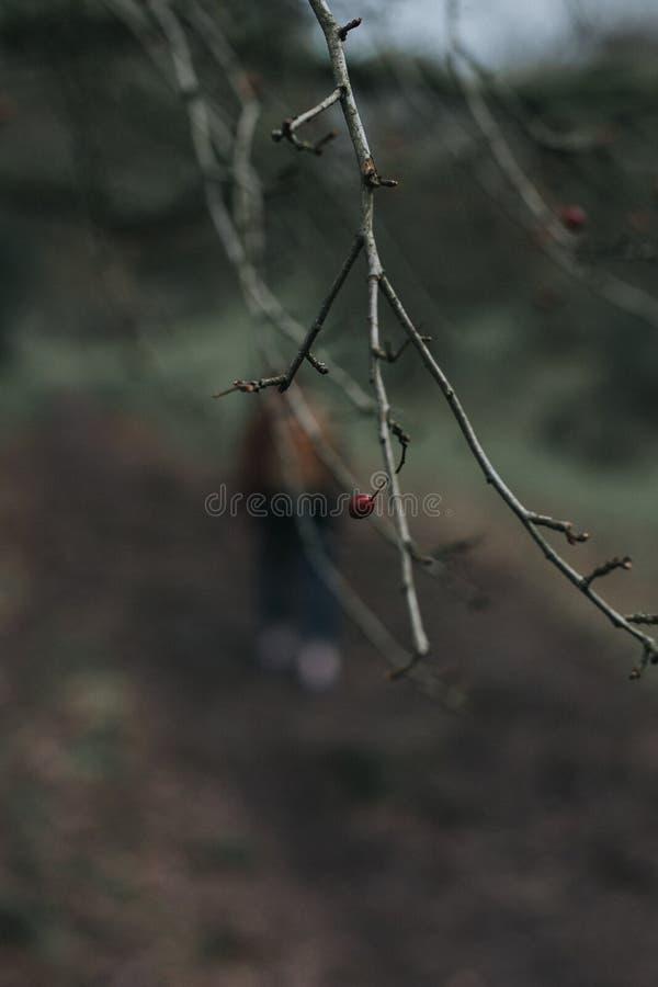 Красный цвет Kumnar деревьев стоковое фото