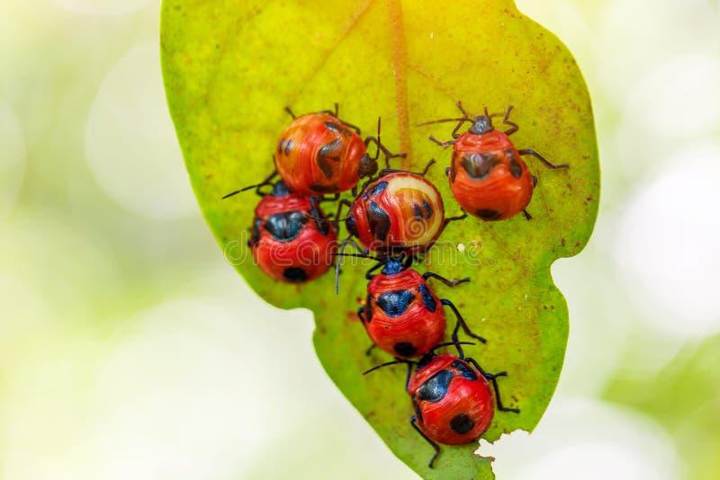 красный цвет ladybug зеленого цвета травы стоковое фото