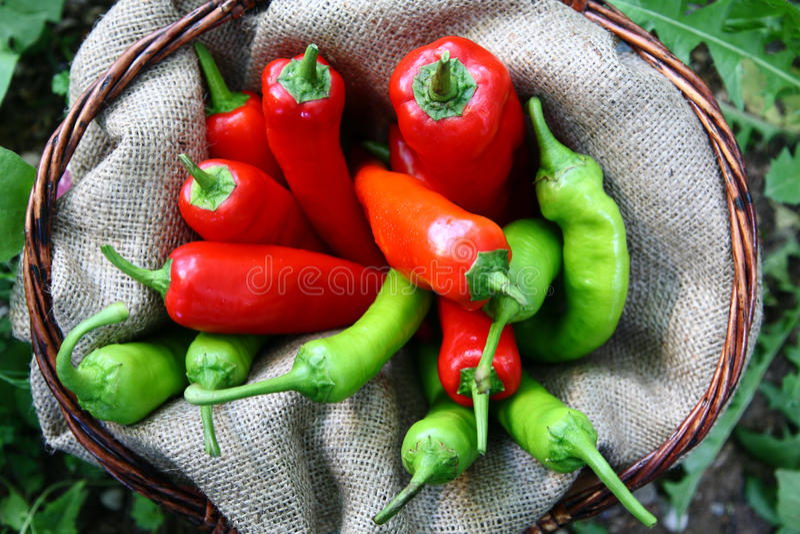 красный цвет peperoni корзины зеленый стоковые изображения
