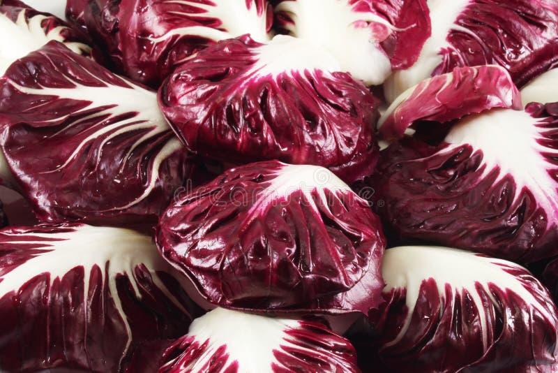 красный цвет radicchio цикория стоковые фото