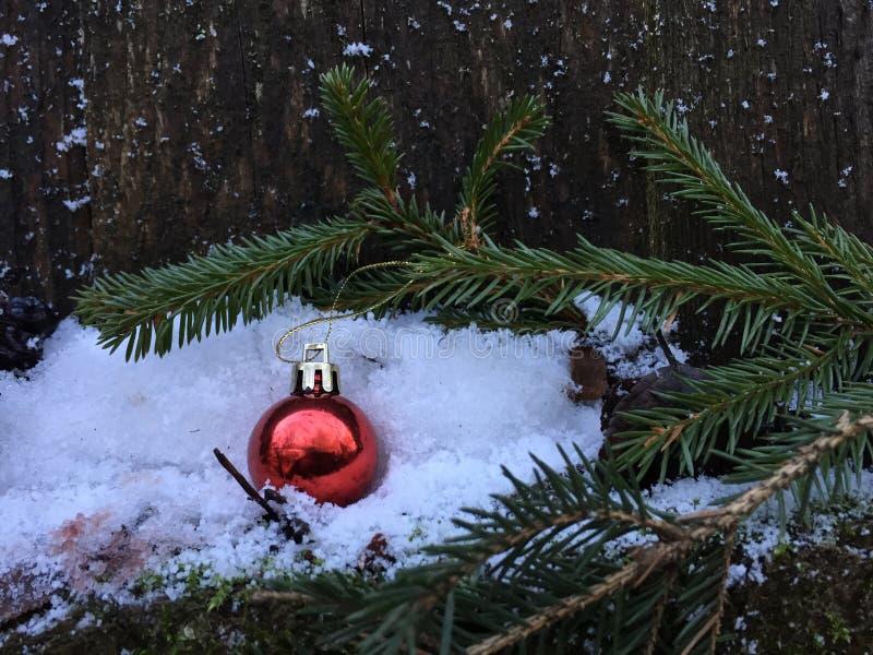 Красный шарик рождества вися на елевой ветви стоковые изображения