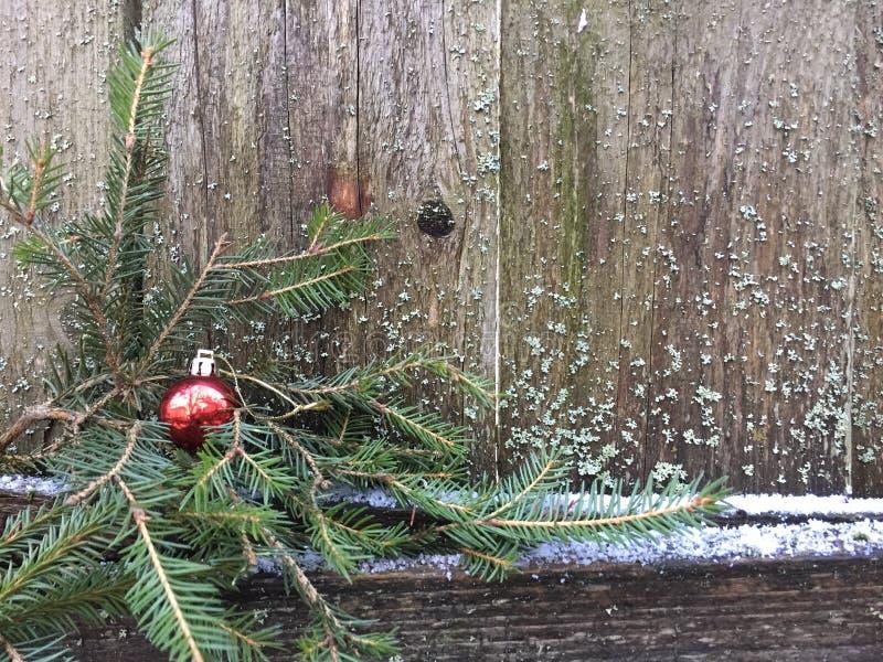 Красный шарик рождества вися на елевой ветви стоковое изображение rf