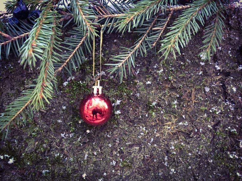 Красный шарик рождества вися на елевой ветви стоковое изображение
