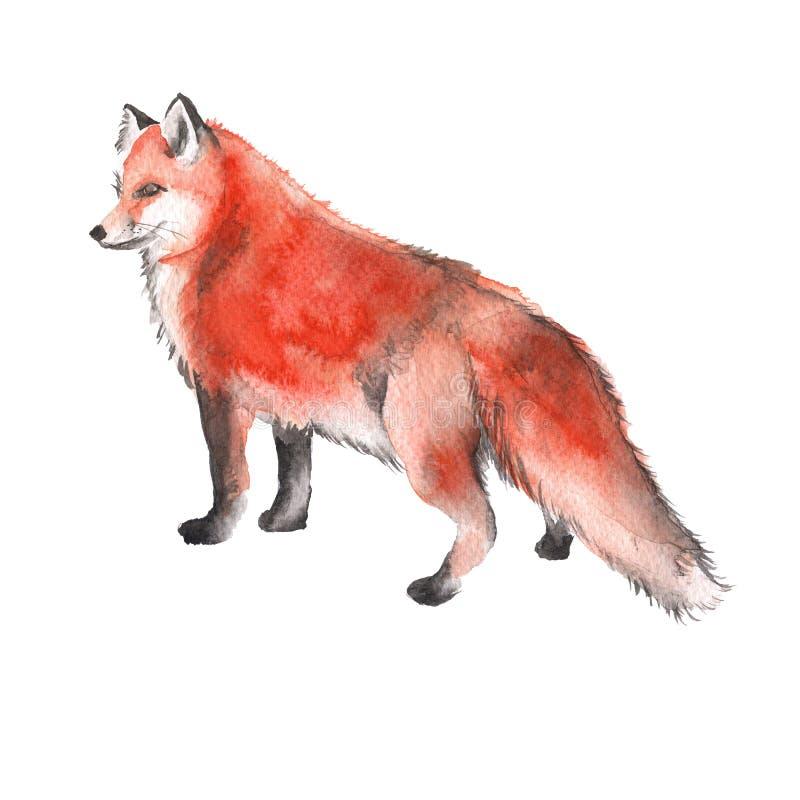 Красный Fox белизна изолированная предпосылкой изображение иллюстрации летания клюва декоративное своя бумажная акварель ласточки бесплатная иллюстрация