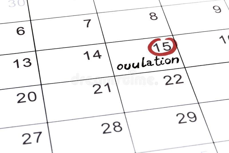 Красный highlighter с меткой дня овуляции на календаре иллюстрация штока